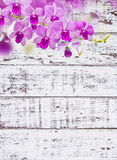 Orquídeas en la madera blanca Fotos de archivo