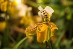 Orquídeas en la puesta del sol en puesta del sol Imágenes de archivo libres de regalías