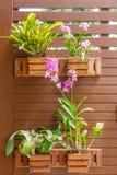Orquídeas en potes cerca de la pared Imagen de archivo libre de regalías