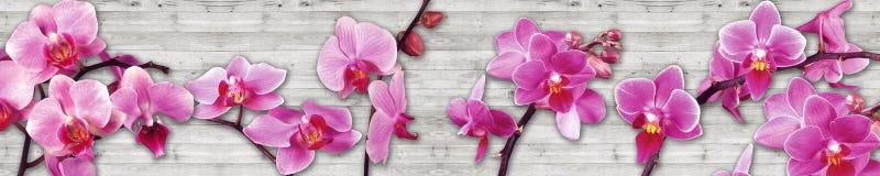 Orquídeas en un fondo de madera Fotografía de archivo libre de regalías