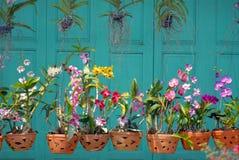 Orquídeas en un fondo verde. Foto de archivo