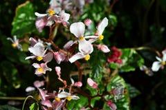 Orquídeas en un jardín Foto de archivo