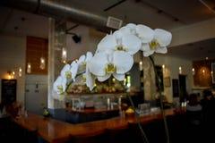 Orquídeas en un restaurante imagen de archivo libre de regalías