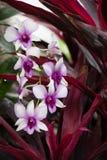 Orquídeas florecientes del blanco rosáceo brillante fotos de archivo