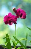 Orquídeas florecientes en jardín botánico Imagenes de archivo