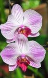 Orquídeas florecientes en jardín botánico Imagen de archivo