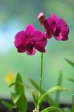 Orquídeas florecientes en jardín botánico Imágenes de archivo libres de regalías