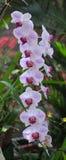 Orquídeas florecientes en jardín botánico Fotos de archivo libres de regalías
