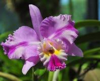 Orquídeas florecientes en jardín botánico Foto de archivo libre de regalías