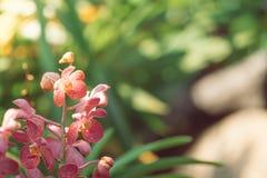 Orquídeas florecientes hermosas en bosque Imagenes de archivo