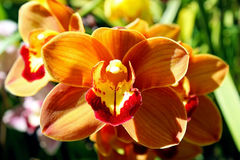 Orquídeas, flores imágenes de archivo libres de regalías