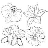 Orquídeas. flores del contorno en un fondo blanco. Imagenes de archivo