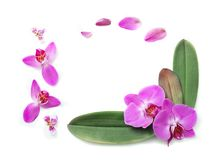 Orquídeas hermosas aisladas en el fondo blanco Fotografía de archivo