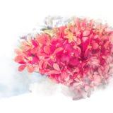 Orquídeas hermosas del flor Imágenes de archivo libres de regalías