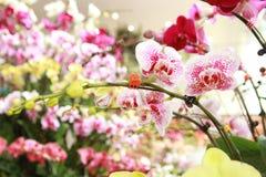 orquídeas hermosas en casa verde Imagen de archivo