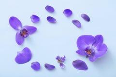 Orquídeas hermosas en fondo azul Imágenes de archivo libres de regalías