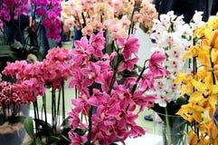 Orquídeas hermosas en los floreros Fotos de archivo libres de regalías