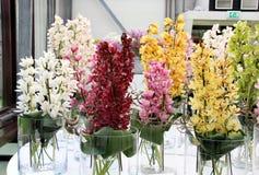 Orquídeas hermosas en los floreros Imagen de archivo