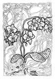 orquídeas Línea negra en fondo del arte Dibujo lineal del arte fotografía de archivo