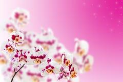 Orquídeas manchadas no fundo do inclinação Fotos de Stock