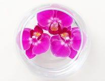 Orquídeas na água Foto de Stock