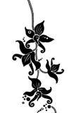 Orquídeas negras Imagenes de archivo