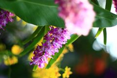 Orquídeas no jardim Foto de Stock Royalty Free