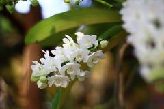 Orquídeas no jardim Fotos de Stock Royalty Free