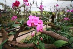 Orquídeas no jardim botânico Fotografia de Stock Royalty Free