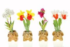Orquídeas no potenciômetro do elefante Imagens de Stock Royalty Free