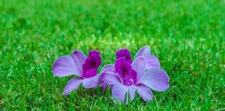 Orquídeas no prado fotos de stock