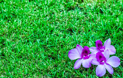 Orquídeas no prado foto de stock royalty free