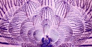 Orquídeas púrpura-azules Fondo de las orquídeas de las flores Composición de la flor primer Flores berrendas abigarradas Fotos de archivo
