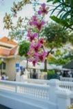 Orquídeas púrpuras, blancas y amarillas en rey Mongut University Fotografía de archivo
