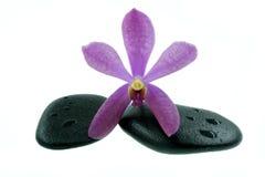 Orquídeas púrpuras con la piedra del zen Fotografía de archivo