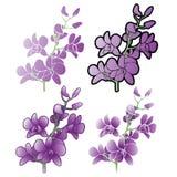 Orquídeas púrpuras, diversas versiones Imagen de archivo