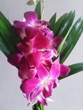 Orquídeas para el arreglo del florero fotos de archivo