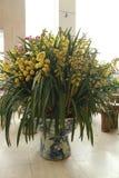orquídeas plantadas en casa Imagen de archivo