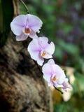 Orquídeas purpúreas claras suaves con el fondo romántico Fotografía de archivo
