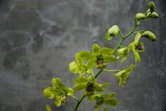 orquídeas que están en la floración foto de archivo