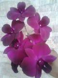 Orquídeas rojas Foto de archivo libre de regalías