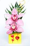 Orquídeas rosadas Fotografía de archivo libre de regalías