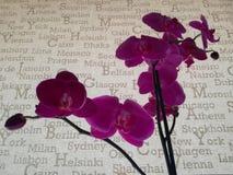 Orquídeas roxas no fundo cinzento com nomes do capital imagens de stock