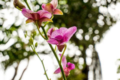 Orquídeas roxas no jardim Foto de Stock