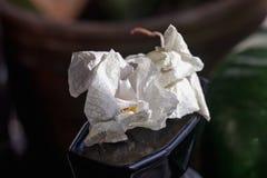 Orquídeas secadas de las flores Fotos de archivo