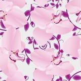 Orquídeas sem emenda do teste padrão ilustração stock