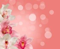 Orquídeas tropicais Fotos de Stock Royalty Free