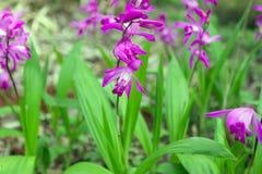 Orquídeas tropicais brancas e roxas Fotografia de Stock Royalty Free