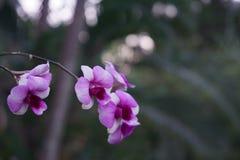 Orquídeas violetas Imagenes de archivo