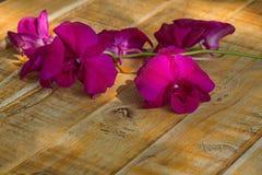 Orquídeas violetas no fundo de madeira Fotografia de Stock Royalty Free